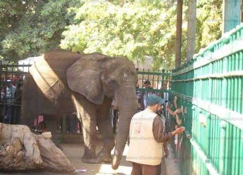 حديقة الحيوان تستقبل 265 ألف زائر خلال عيد الأضحى