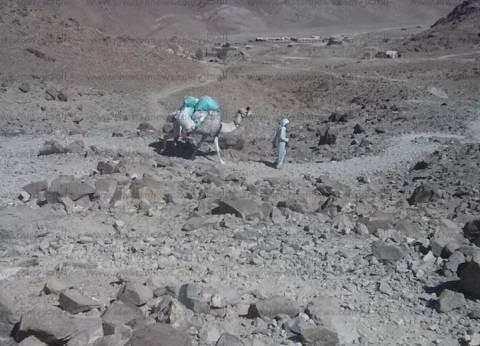 بالصور| محمية سانت كاترين تشن حملة نظافة على قمة جبل موسى