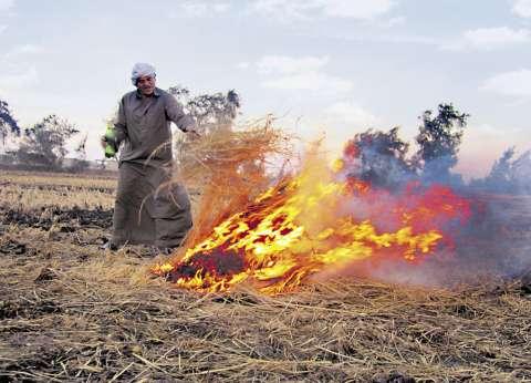 """""""شؤون البيئة"""" يواصل حملات مواجهة حرق قش الأرز في الغربية وكفرالشيخ"""