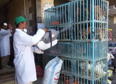 حملة لتطهير محال الطيور للوقاية من انفلونزا الطيور بالبحر الأحمر
