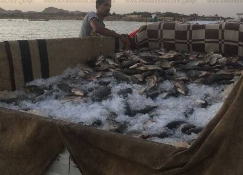 15 إبريل.. محافظ أسوان يعقد اجتماعا قبل إغلاق بحيرة ناصر أمام الصيد