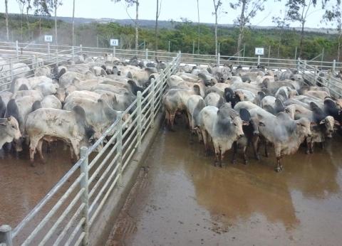 تضامن المنيا: 147 رأس ماشية من الجمعيات الأهلية للقرى الأكثر احتياجا
