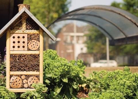 """""""فنادق الحشرات"""".. بديل المبيدات الحشرية للحفاظ على المحاصيل الزراعية"""