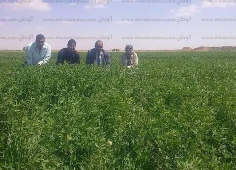 """وكيل """"زراعة الإسماعيلية"""": نستهدف زراعة 60 ألف فدان بنجر وقمح"""
