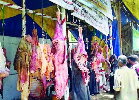 """أسعار اللحوم تتحدى حملات الحكومة.. 120 جنيها لـ""""البلدي"""" و75 لـ""""السودانية"""" بالمنيا"""