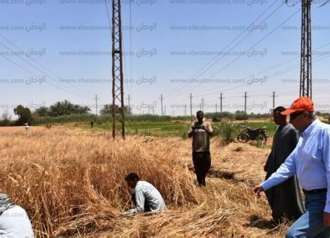 """""""الزراعة"""": بدء الحملة القومية لمحصول الذرة الشامية بالإسماعيلية"""