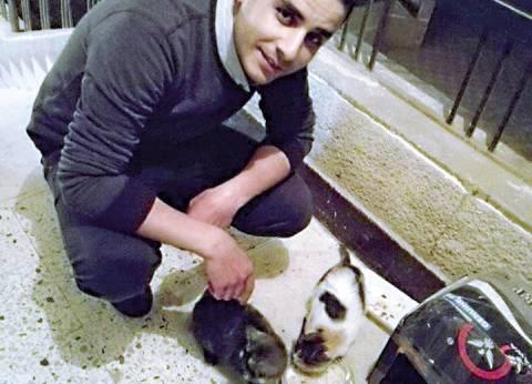 «مصطفى» صنع بيوت كارتون لإيواء الحيوانات الأليفة: الرحمة حلوة