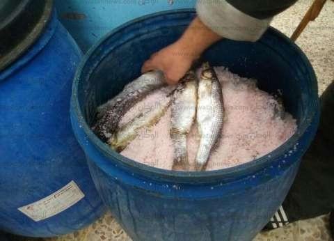 غرفة عمليات في الإسكندرية لاستقبال محاضر الأسماك الفاسدة