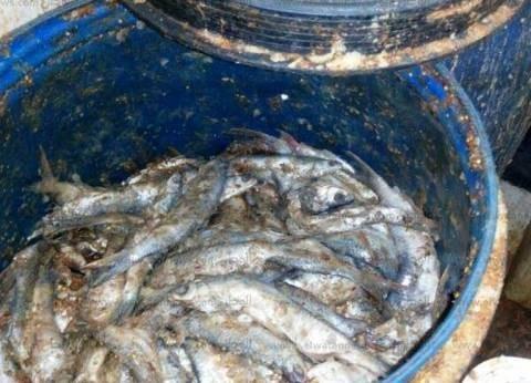 بالصور  وكيل وزارة الصحة بأسوان: ضبطنا 4200 كيلو سمك فاسد