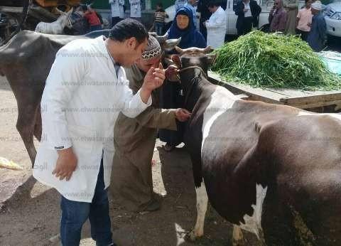 """""""بيطري الفيوم"""" يحصن 45 رأس ماشية ضد فيروس السعار"""