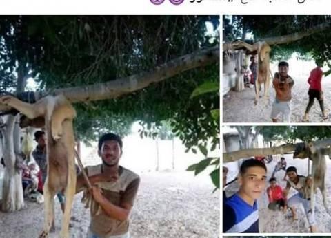 صور جديدة لتعذيب الكلاب.. واستشاري نفسي: بسبب العنف في البيوت والمدارس