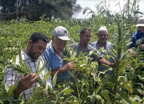 """""""زراعة الغربية"""" تنهي استعدادات استلام القطن من المزارعين"""