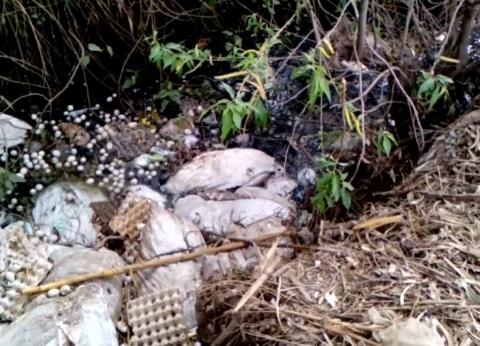 مزارعو القليوبية هجروا الأرض بسبب الصرف المغطى والمبيدات المغشوشة