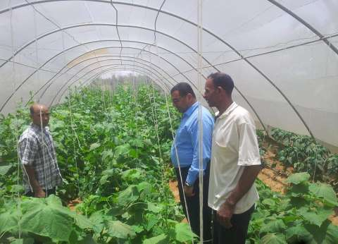 جمعية أهلية تنشئ صوب زراعية لتوفير فرص عمل للشباب في الوادي الجديد