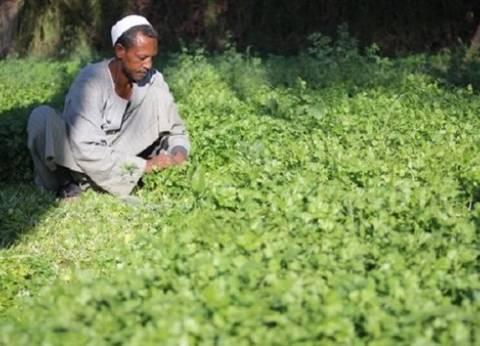 """""""زراعة كفر الشيخ"""" تتسلم 14 ألف إردب بذرة القطن لتوزيعها على المزارعين"""