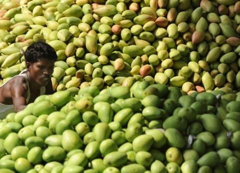 """""""الزراعة"""" تنتهي من معالجة 57 ألف فدان مانجو من """"العفن الهبابي"""""""