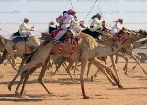 """اليوم.. محافظ جنوب سيناء يشهد ختام مهرجان سباق الهجن بـ""""سهل القاع"""""""