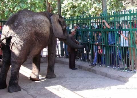 30 ألف زائر لحديقة الحيوان في ثاني أيام عيد الأضحى