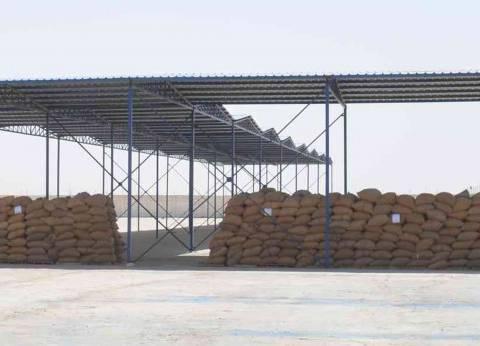 50 شونة لتوريد محصول القمح في المنيا