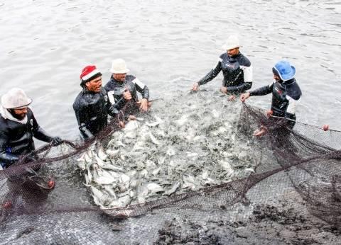 الاستزراع السمكى: 4440 حوضاً لـ«الأسماك البحرية» توفر 10 آلاف فرصة عمل