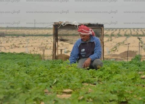 «حسين»: «زرعت الـ5 فدادين بتوعى صبار وباكسب منه حلو»