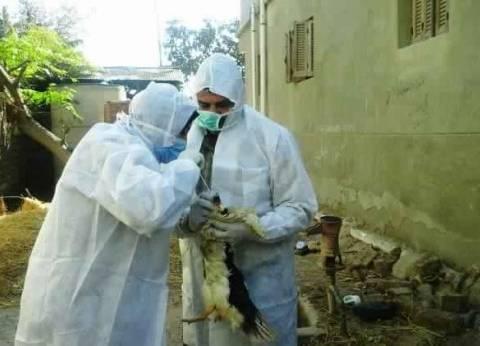 الزراعة: تحصين 674 ألف رأس ماشية ضد الأمراض الوبائية خلال مارس