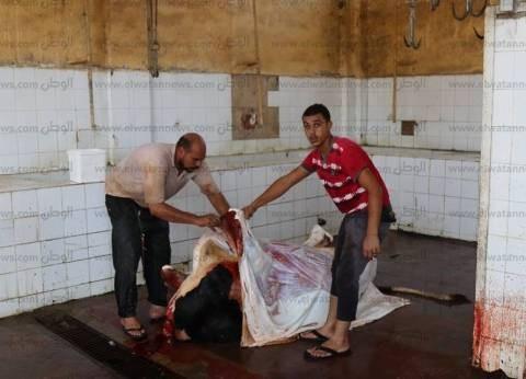 مجازر كفر الشيخ تذبح 1400 رأس ماشية في أيام عيد الأضحى