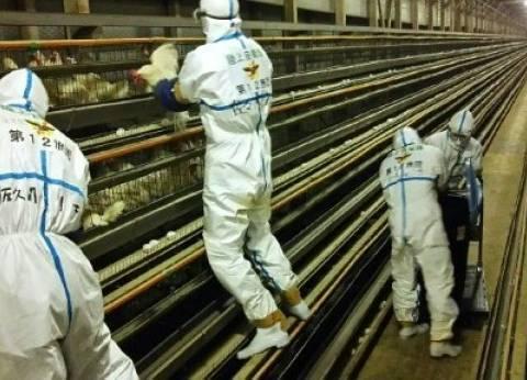 """""""الزراعة"""" و""""الفاو"""" تنظمان اجتماعا لبحث سبل السيطرة على إنفلونزا الطيور"""
