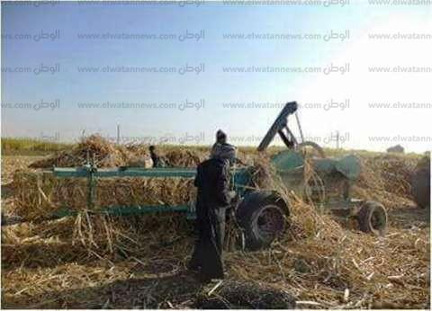 بدء موسم عصير القصب في مصانع نجع حمادي