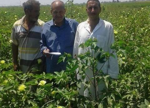 """""""الزراعة"""": توزيع 50% من الأسمدة لسد احتياجات زراعات القصاصين"""