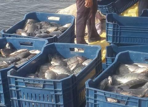الثروة السمكية: مصر الأولى عالميا في إنتاج الأسماك