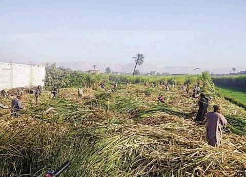 مزارعو قنا يهددون بعدم توريد القصب للمصانع إلا بعد رفع السعر