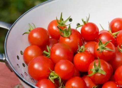 استقرار أسعار الخضراوات.. وكيلو الطماطم بـ5.5 جنيه