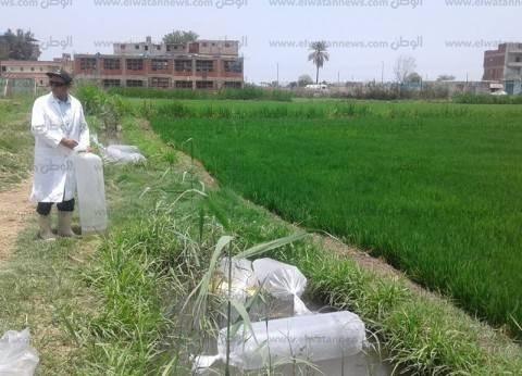 """رئيس """"البحوث الزراعية"""" الأسبق يحذر من استيراد الأرز الشعير: يحمل أمراض"""
