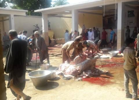 ذبح 67 رأس ماشية في المجازر الحكومية بالفيوم في ثالت أيام العيد