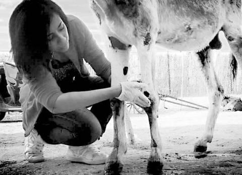 جراحات دون «بنج» وتشريح «على قيد الحياة».. لا ترحم حيواناً فأنت فى كلية «الطب البيطرى»