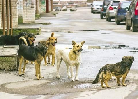 كلب يعقر 11 شخصا بينهم 8 إناث في الغربية