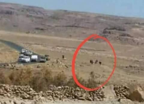 بالصور| كيف خطط الحوثيون للهجوم على الرئيس اليمني السابق؟