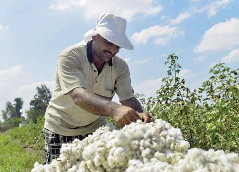 """""""فلاحين الفيوم"""" تطالب الحكومة بقبول جميع كميات محصول القطن من المزارعين"""