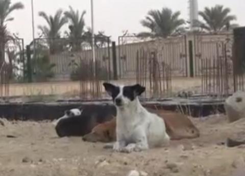 """""""صحة المنوفية"""": سجلنا 6241 حالة عقر من الكلاب الضالة خلال 4 أشهر"""