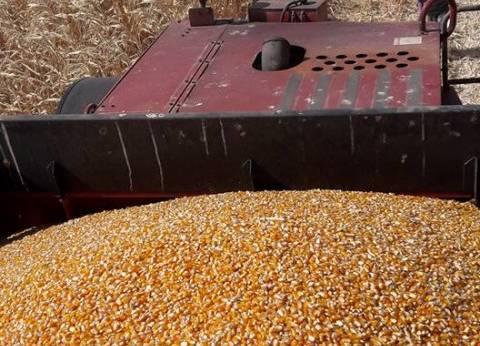 استمرار الحملة القومية للنهوض بزراعة الذرة الشامية في الإسماعيلية