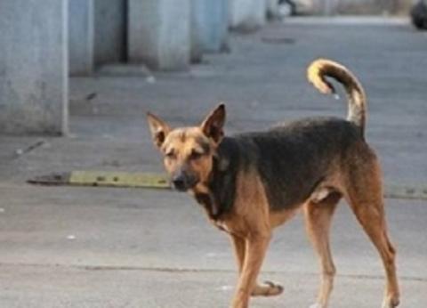 """""""بيطرية قنا"""": إعدام 489 كلب ضال بالشوارع حماية للمواطنين"""