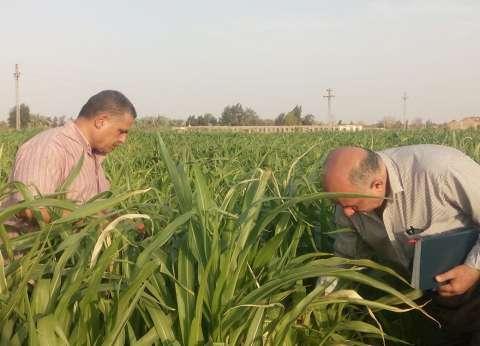 """""""زراعة الوادي الجديد"""" تعقد ندوات إرشادية حول مكافحة الآفات"""