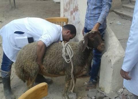 ندوة عن الشروط الصحية للأضحية بقصر ثقافة طور سيناء