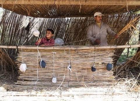 صانع «الستر» من أعواد البوص.. «سدد الغاب» أسطح وأبواب للفقراء