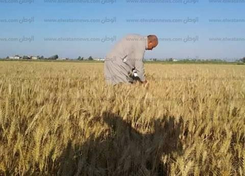 """بوخاريست: مصر لم ترفض """"القمح"""".. ومفتشون مصريون استلموه من رومانيا"""