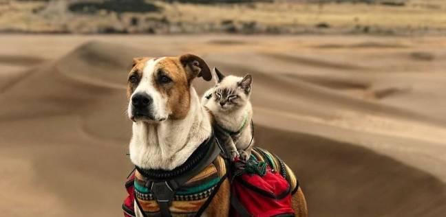 الكلب والقطة