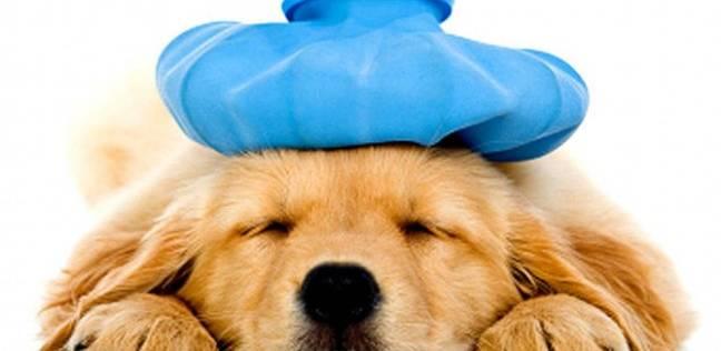 عيادة بيطرية متنقلة لإنقاذ الحيوانات الأليفة