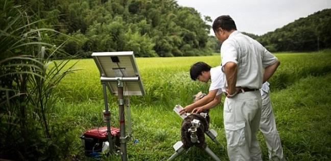 ذئاب آلية لحماية المحاصيل من الحيوانات البرية في اليابان