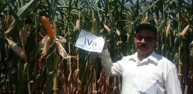 """""""الزراعة"""" تستعد لإطلاق الحملة القومية للنهوض بالذرة الشامية"""